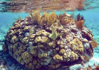 coralgardens2