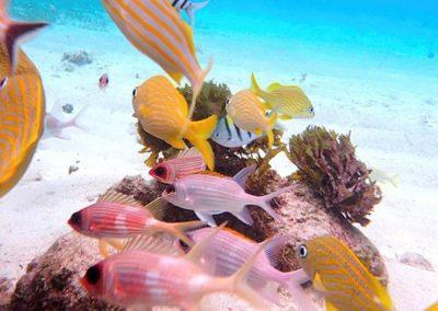 coralgardens_addition