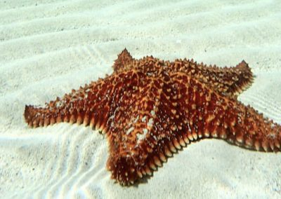 starfishpoint_3_undercayman